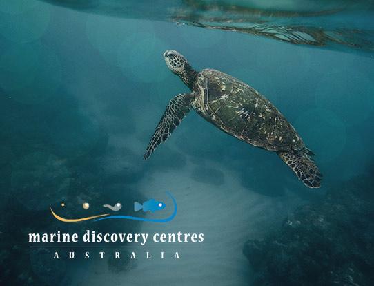 Marine Discovery Centres Australia
